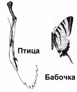 Крылья птицы и бабочки