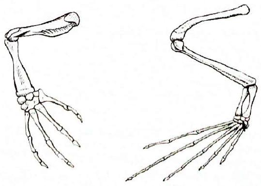 Ноги земноводного