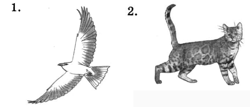 Птица и кошка