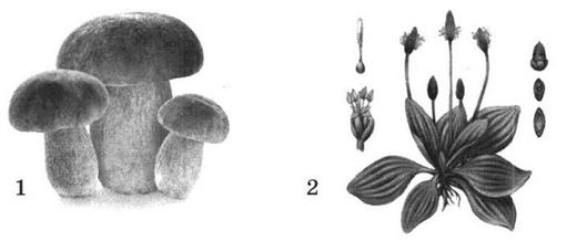 Гриб и растение