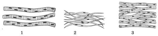 Типы мышечных тканей