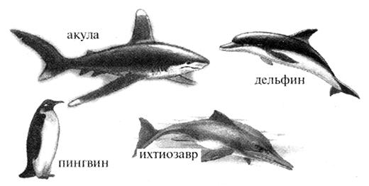 Акула, дельфин, пингвин, ихтиозавр