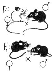 Скрещивание мышей